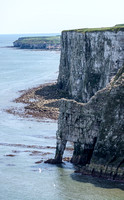 Bempton Cliffs May 2017