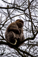 Monkey Forest, Trentham, Staffordshire